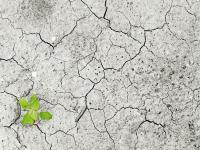 Zanieczyszczenie gleby w Polsce - rodzaje, przyczyny i zapobieganie