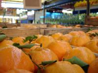 XIV Śląski Kiermasz Żywności Ekologicznej
