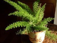 Domowe rośliny a oczyszczanie powietrza