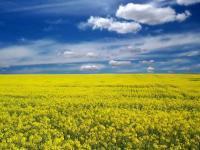 Bioetanol z odpadków – ekologiczne źródło energii