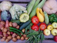 Warzywa i owoce kontra rak
