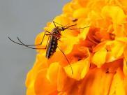 Jak poradzić sobie z natrętnymi komarami?