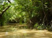 Amazonia – miejska dżungla