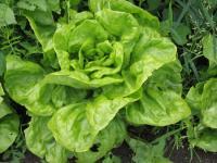 Zielone warzywa liściaste a cukrzyca typu 2