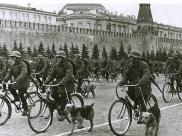Psy wojny. Pies i II wojna światowa