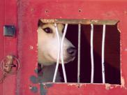 Prawa zwierząt. Tragiczny los bezdomnych zwierząt ...