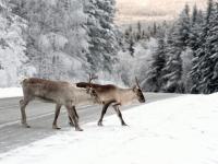 Baśniowa Laponia
