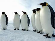Sposoby pingwinów na szybką rozgrzewkę