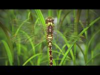 """""""Nature by Numbers"""" – film inspirowany przyrodą, matematyką i geometrią"""