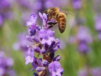 Wszyscy możemy zrobić coś pożytecznego dla pszczół. I to w bardzo prosty sposób!