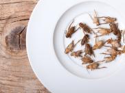 Jadalne owady. Czy owady wejdą do europejskiego ...