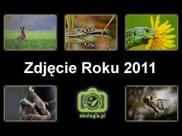 Konkurs fotograficzny Zdjęcie Roku 2011 Ekologia ...