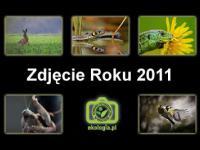 Konkurs fotograficzny Zdjęcie Roku 2011 Ekologia.pl rozstrzygnięty!