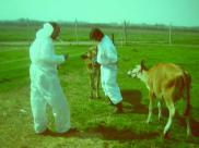 Transgeniczne organizmy (GMO) to wybawienie czy ...