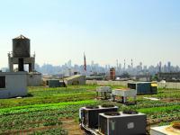 Farma w mieście. Świeże warzywa i owoce prosto z dachu