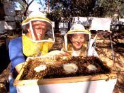 Sytuacja pszczoły miodnej w Polsce