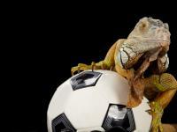 Euro 2012: zwierzęta wytypują wyniki meczów