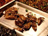 Jakie owady na obiad?