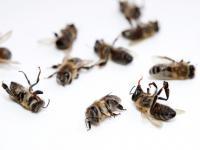 Wyobraź sobie świat bez pszczół...