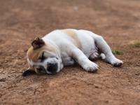 Jak śpią zwierzęta?