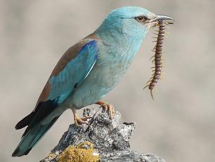 Jak świętować Międzynarodowy Dzień Ptaków?