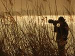 Obserwowanie ptaków – zajęcie dla miłośnika przyrody