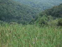 Ścisła ochrona dla Magurskiego Parku Narodowego