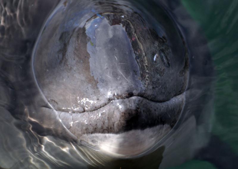 Godzina dla Ziemi uratuje bałtyckiego morświna?