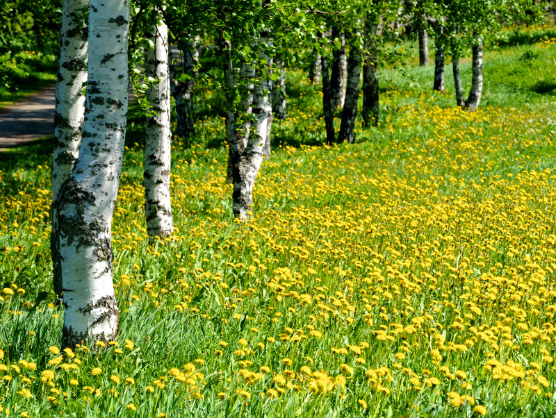 Ekonomiczna wartość ekosystemów i różnorodność biologiczna Polski