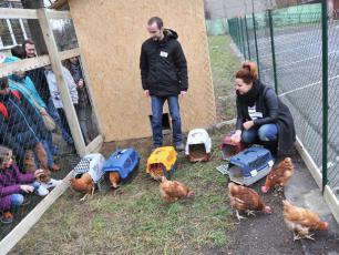 Uratowali kury. Nioski będą edukowały dzieci