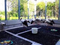 Co zrobić z rannym ptakiem, jak mu pomóc? Wywiad z Agnieszką Czujkowską