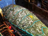 Ważą się losy bałtyckich ryb. Wywiad z Justyną Niewolewską