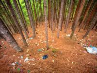 Ustawa śmieciowa powinna trafić do kosza