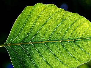 Przez liść do drzewa