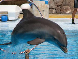 Nie ma zgody dla komercyjnych delfinariów w Polsce