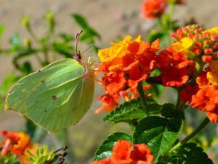 Dlaczego owady zapylają rośliny?
