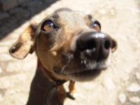 Jak pies postrzega świat?