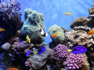 Kremy z filtrem zabójcze dla raf koralowych