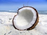 Kokos – pochodzenie i wartości odżywcze orzecha kokosowego
