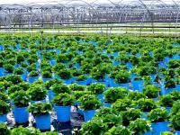 Rośliny do ogrodu – jakie rośliny kupić do przydomowego ogrodu?