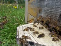 """""""Pomóżmy pszczołom przetrwać"""" –  II Mazowiecka Konferencja Pszczelarska"""