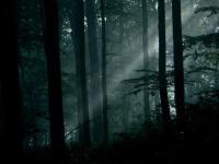 Odkryj tajemnice, które skrywa las