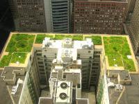 Trawa na dachu pomoże walczyć ze smogiem