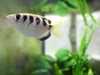 Ryby rozpoznają ludzkie twarze