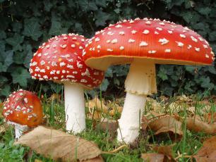 Sprawdź, których grzybów nie zbierać
