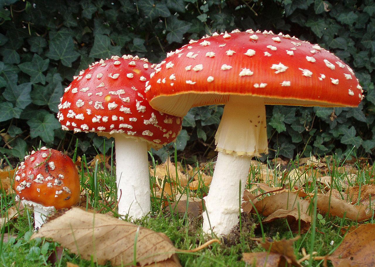 Grzyby trujące w Polsce. Sprawdź, których grzybów nie powinieneś zbierać