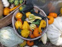 Jak dbać odporność jesienią? Pomoże dobra dieta