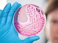 Wkraczamy w erę lekoopornych bakterii