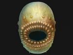 Jak wygląda najstarszy praprzodek człowieka?