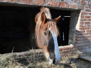 Skrajnie zaniedbane zwierzęta w gospodarstwie w Kazimierzu Dolnym